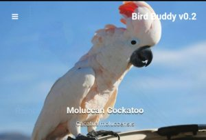 birdbuddy home page