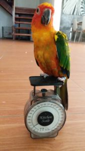 birdbuddy weigh bird scale