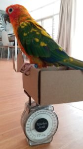 birdbuddy weigh bird in box scale