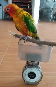 birdbuddy weigh twig scale