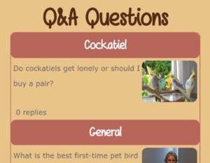 bird Q&A question answer